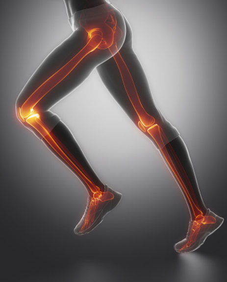 Legs with bones highlighted
